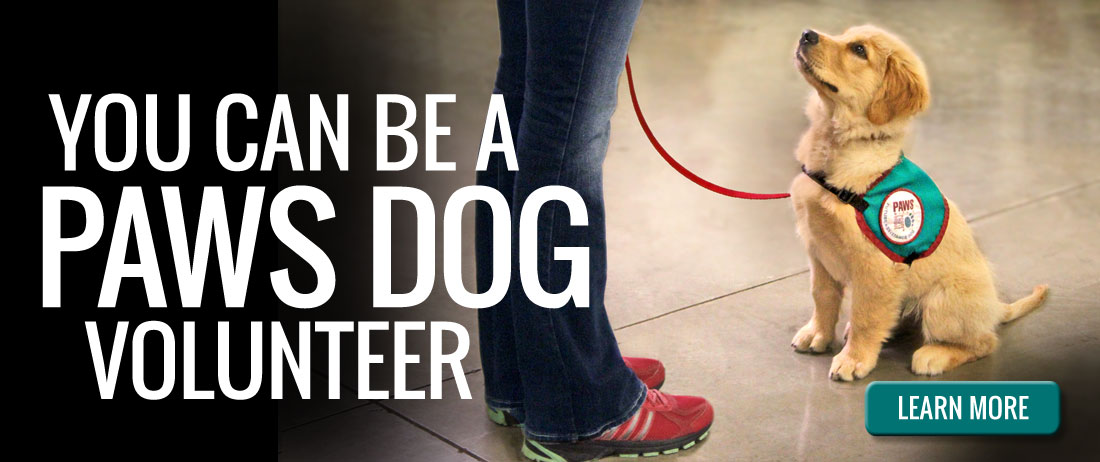 You Can Be A PAWS Dog Volunteer