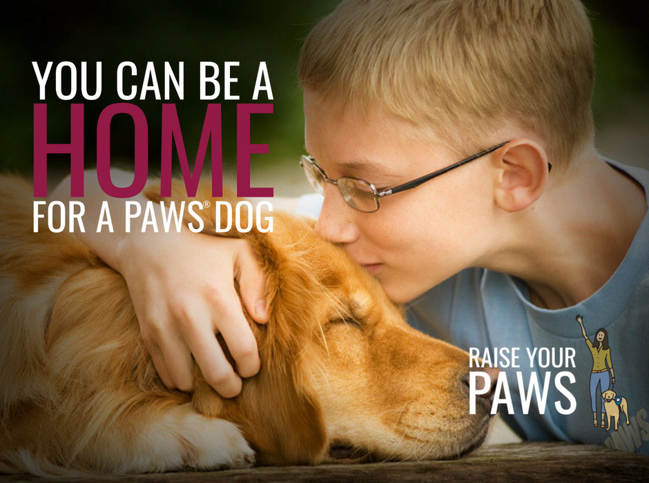 You can be a home for a Paws dog