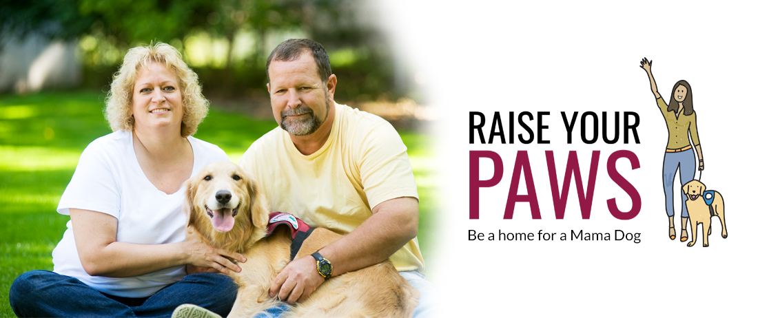 Raise your paws - be a home for a mama dog