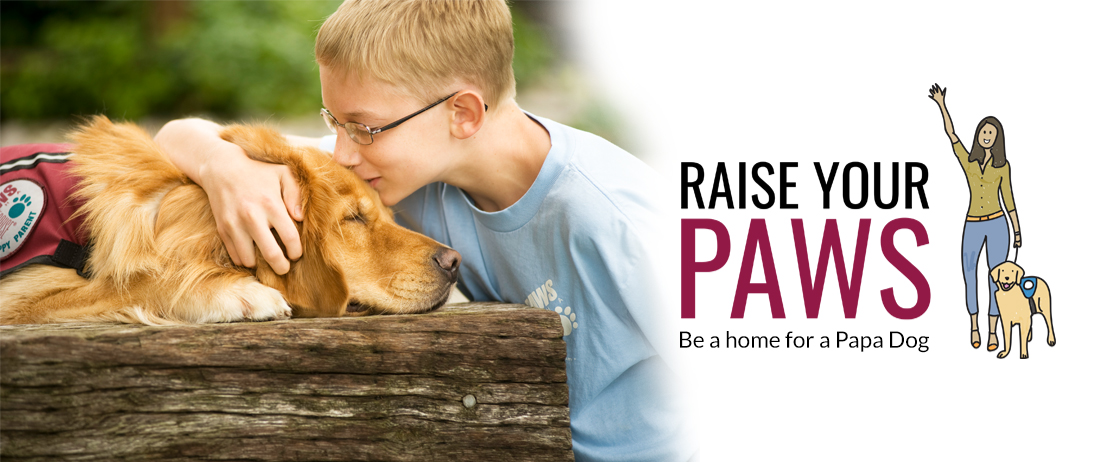 Raise your paws - be a home for a papa dog