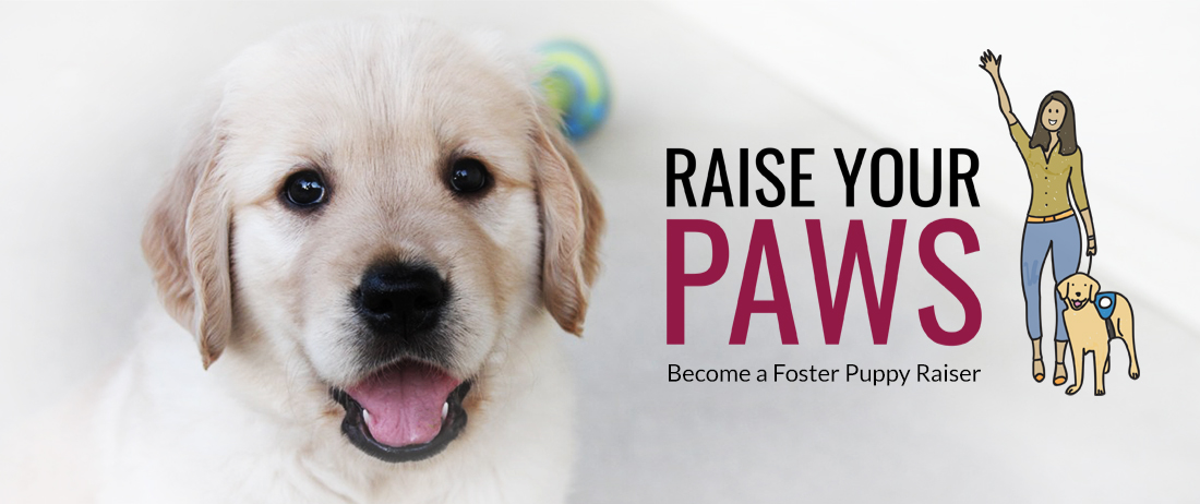 Raise your paws - become a foster puppy raiser